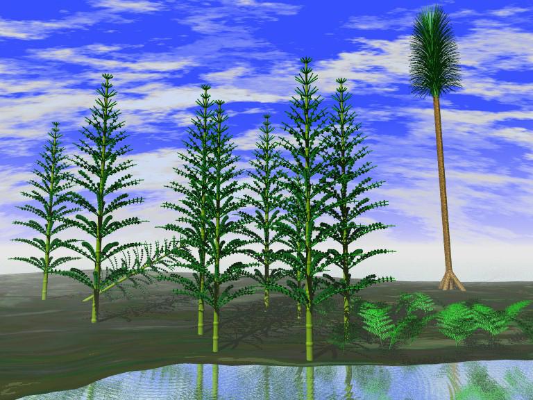 humulus lupulus illustration 4iyu