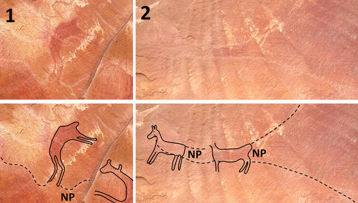 Palaeontologia electronica an alleged dinosaur petroglyph in havasupai canyon arizona and interpretations of its identity 31 the petroglyph from hubbard 1927 32 publicscrutiny Gallery