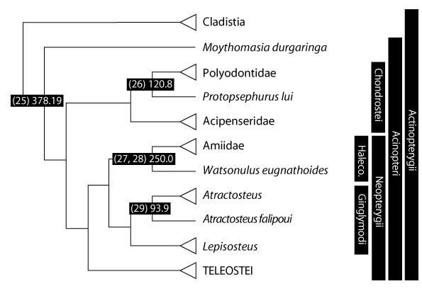 Camarhynchus pallidus - Wikipedia, the free encyclopedia