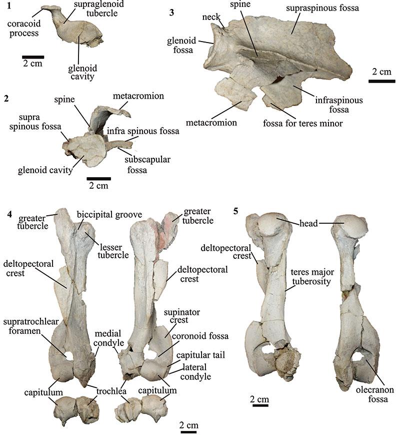Palaeontologia Electronica